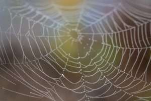 close up of a spider web representing backlinks