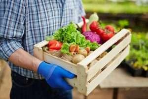Gardener holding fresh vegetables to represent organic keywords